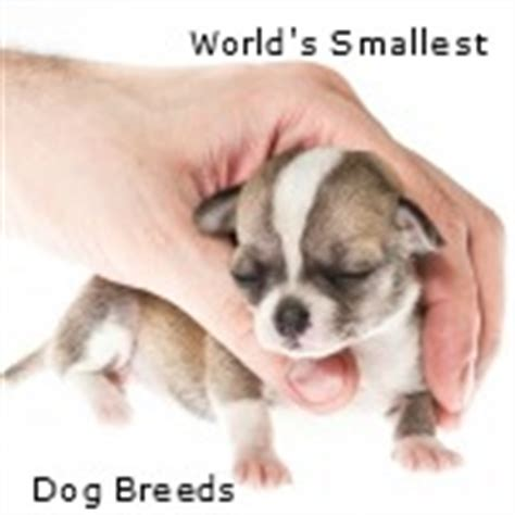 tiny breeds that stay small tiny dogs that stay small