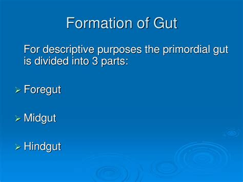 today i rise how to overcome the gut wrenching of your breakup or divorce reclaim your books ppt folding of the embryo formation of gut endodermal