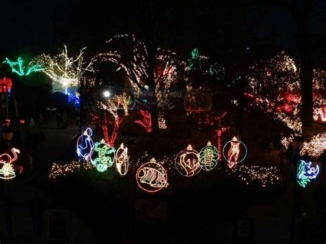 lights before christmas display at toledo zoo should be