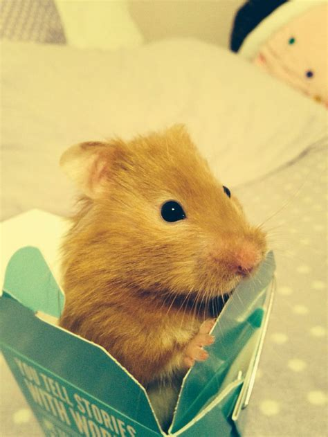Hamster Origami - 18 best images about origami owl lead designer on
