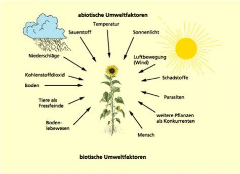 zeigerpflanzen tabelle abiotische umweltfaktoren in biologie sch 252 lerlexikon