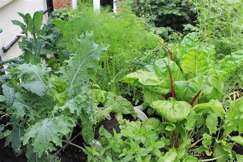 edible plants  grow  shade