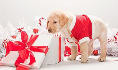 christmas gifts for your pets dog crackers animal
