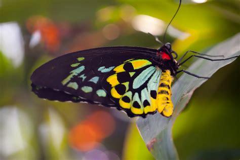 black wallpaper with yellow butterflies jeff finkelstein photography butterflies photos