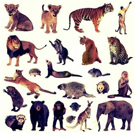 imagenes animales terrestres animales terrestres definici 243 n caracter 237 sticas y tipos