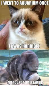 Best Angry Cat Meme - grumpy cat memes best collection of funny grumpy cat pictures