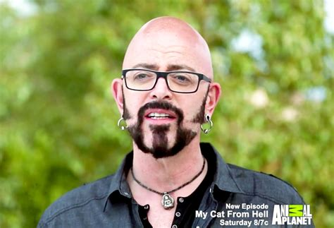 fat cat tattoo jackson ca my cat from hell s jackson galaxy dishes on driving 50