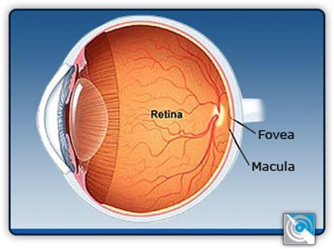 imagenes web retina display 191 que es la retina www visionlaserinternacional com
