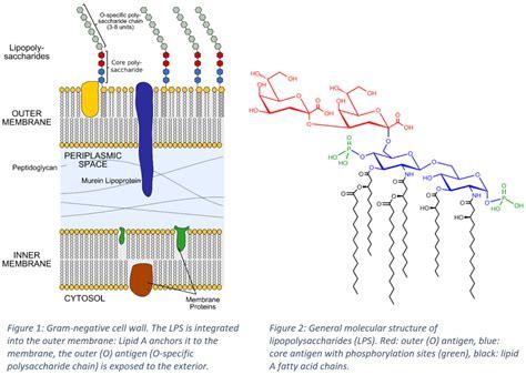 endotoxins  structural link  cyanobacteria