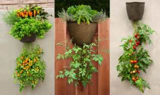 hanging tomato planter garden365