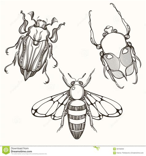 hand drawn engraving sketch of scarab beetle may bug and