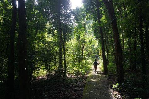 film petualangan di alam mongabay co id