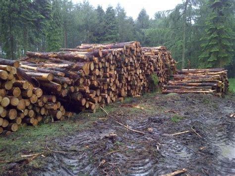 legna per camino migliore legna per camino camini e caminetti legna per