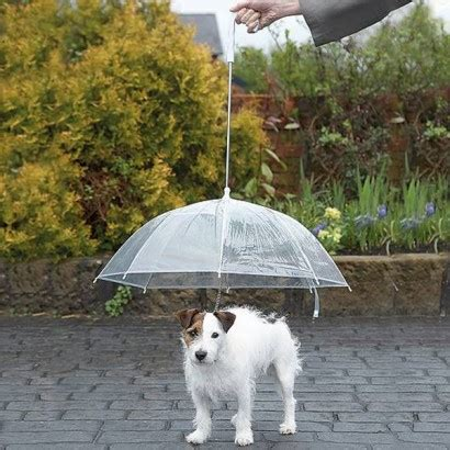 puppy umbrella umbrella