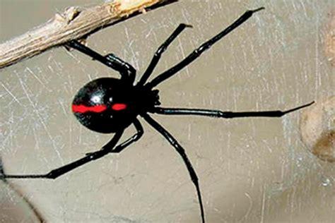 imagenes de animales venenosos image gallery insectos venenosos