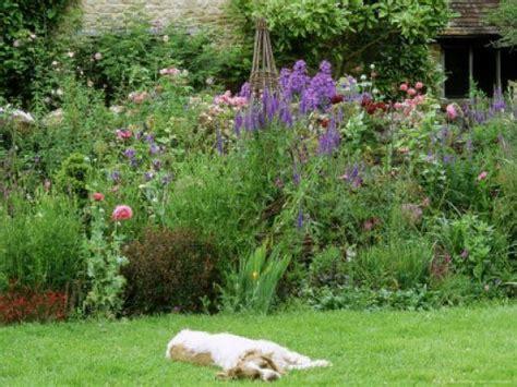 dog friendly backyard landscaping dog friendly garden