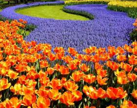 New Beautiful Flowers - world top pictures beautiful flowers new pics