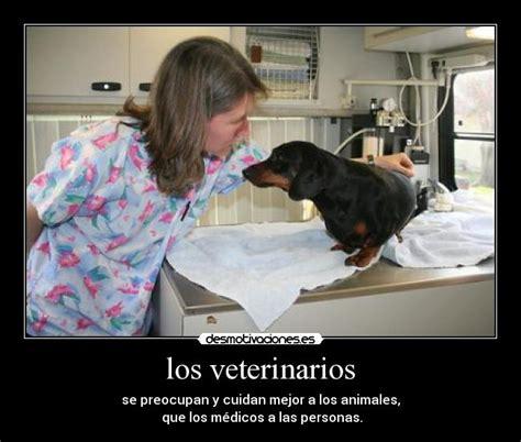 imagenes de medicas veterinarias los veterinarios desmotivaciones