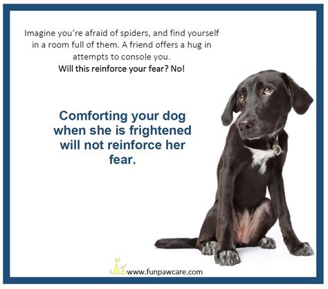why are dogs scared of thunder scared of thunder quotes quotesgram
