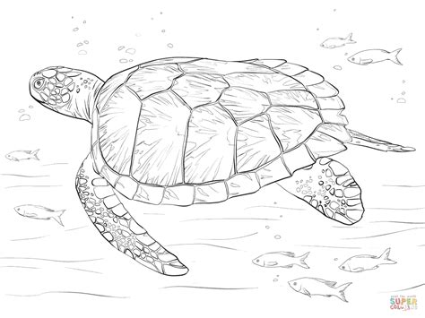 coloring page sea turtle green sea turtle coloring page free printable coloring pages