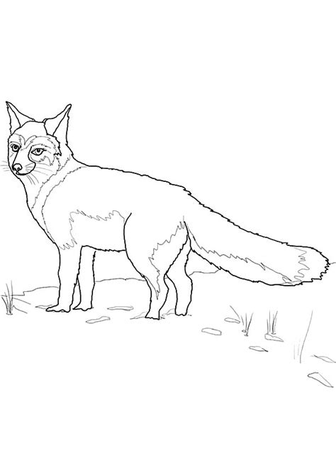 kit fox coloring page male fox coloring pages