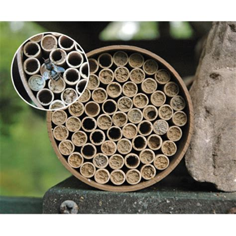 buy bee house buy mason bee houses kinsmangarden com