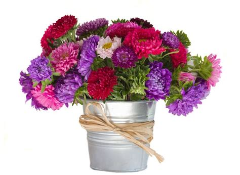 bouquet of aster flowers in vase stock photo colourbox