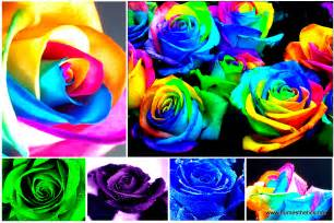 how to make colored learn how to make simple colored and rainbow roses
