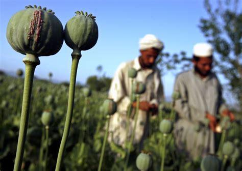 Opium by Opium Causes Symptoms Treatment Opium