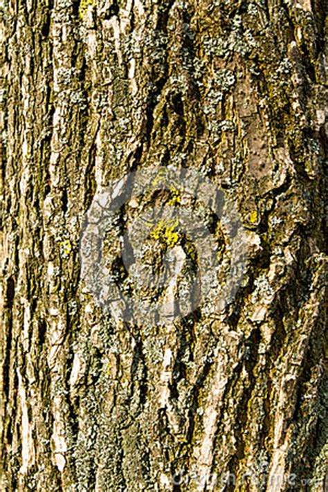 skin the color of bark bark texture stock photography image 37996092