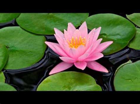 lotus bloom lotus bloom homestuck soundtrack