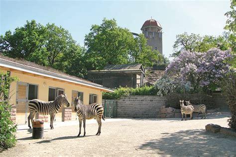 Zoologischer Garten Halle Bergzoo Halle Saale by Zoo Halle Halle365 I Tipps Termine F 252 R Halle
