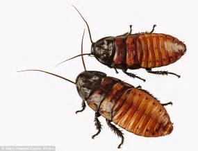 Harris Bed Bug Killer Malaysia