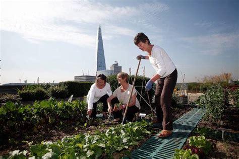 orti in terrazzo con gli orti in terrazzo il risparmio 232 garantito harpo spa