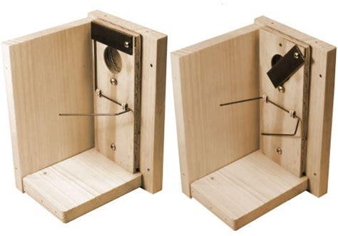 House Sparrow Trap Plans Nestboxbuilder Article On House Sparrows