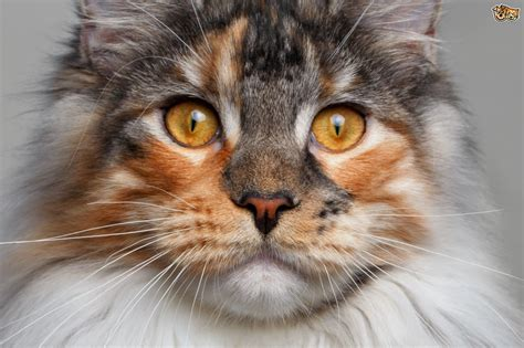 keeps sneezing should i worry when my cat keeps sneezing pets4homes