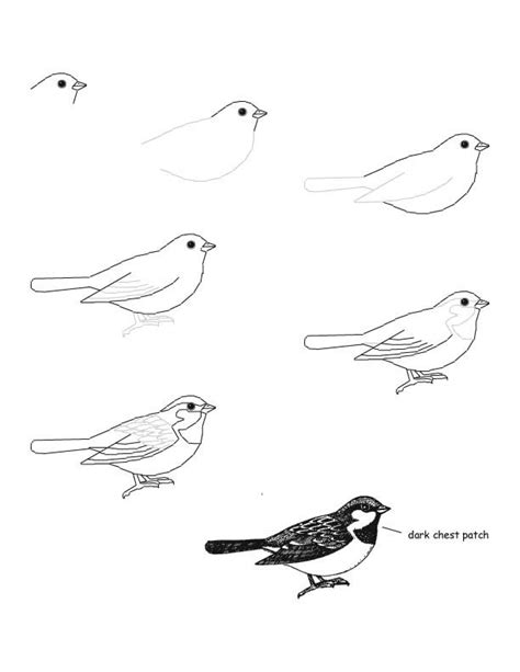 how to draw doodle birds bird that looks easy to do drawing how to s