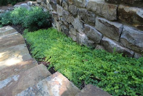 select the best 4 outdoor plants for shaded areas
