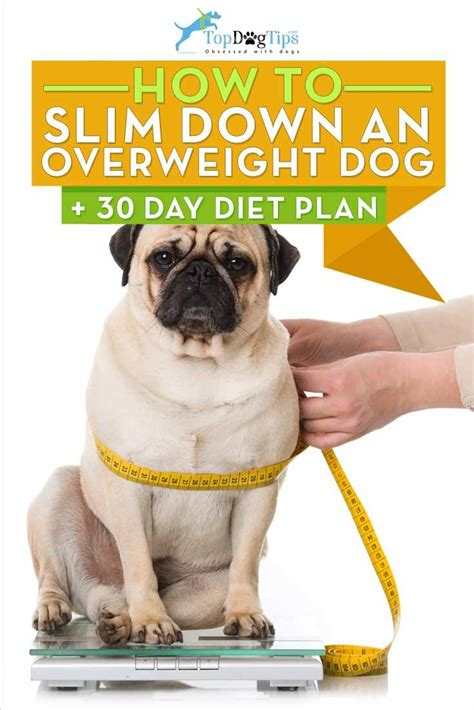 pug diet plan 17 best ideas about dogs on puppies kittens and