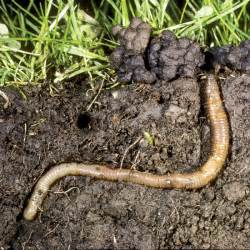 the benefits of earthworms and how to attract them