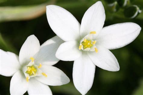 curarsi con i fiori di bach superare un forte stress emotivo con i fiori di bach