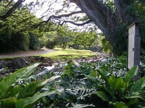 Waimea Arboretum And Botanical Garden Ohai Ali I Plant Picture Of Waimea Arboretum And Botanical Garden Oahu Tripadvisor