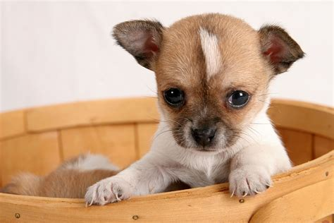 5 tips for buying and taking home a new puppy mipet