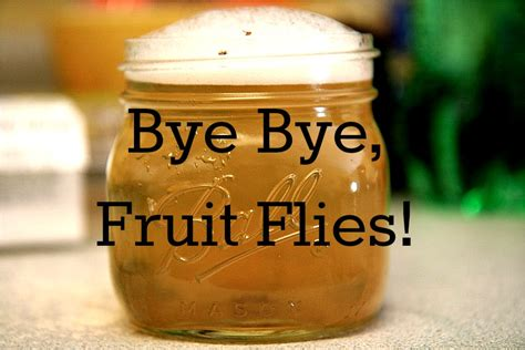 how to get rid of flies in my backyard get rid of fruit flies suburban turmoilsuburban turmoil