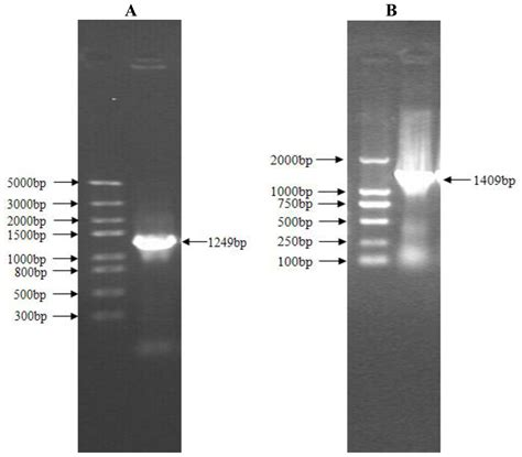 pattern motif protein ijms free full text molecular characterization and