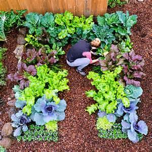 keyhole garden layout growing winter vegetables sunset