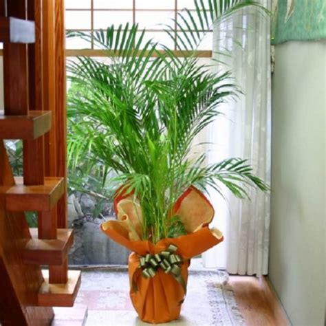 Design Beautiful Indoor Plants Ideas Indoor Plants Beautiful Plants For Amazing Indoor Decoration Interior Design