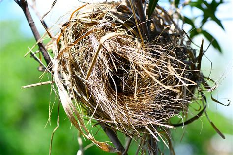 The Birds Nest bird nest
