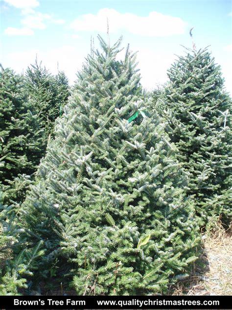 wholesale real trees wholesale trees