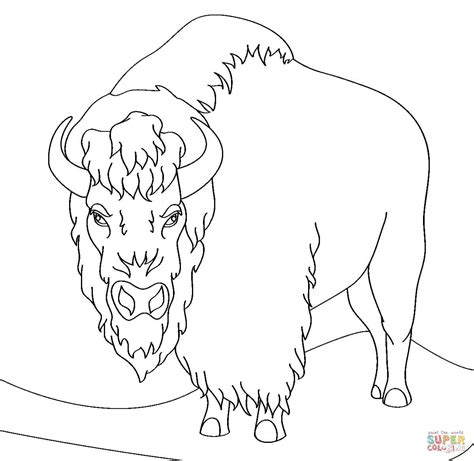 american bison coloring pages bing images